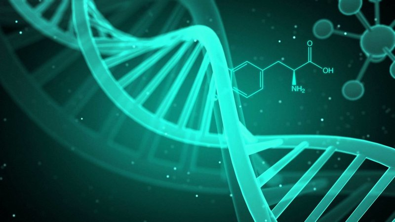 nutrigenomics dna